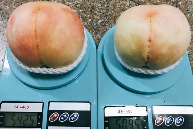 无锡阳山水蜜桃个头比较大的且甜度高的是什么品种,一般什么时候成熟?